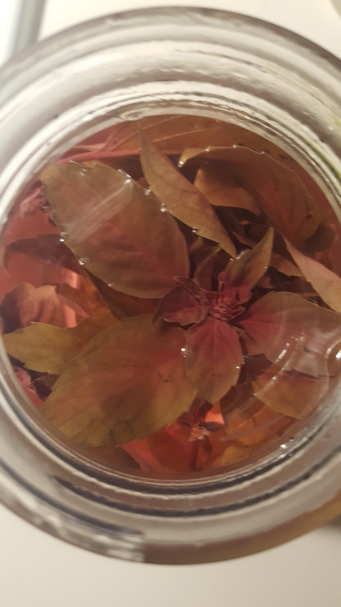 Make Your Own Homemade Flavored Vinegar From Fresh Herbs